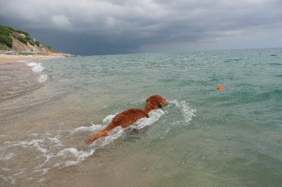 Je brave les vagues !
